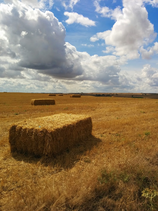Hay fields on the high meseta near Burgos
